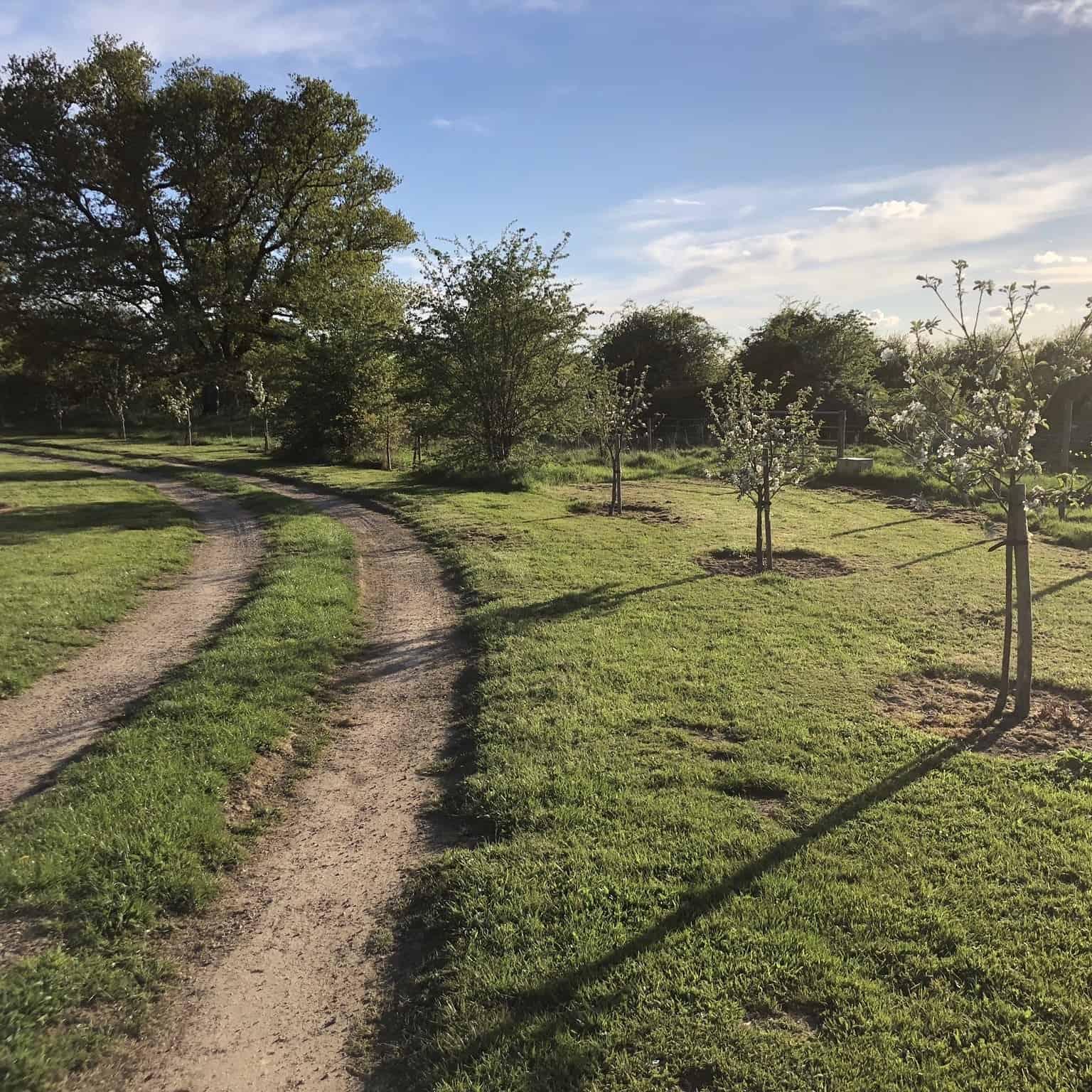 gooseberry field entrance track
